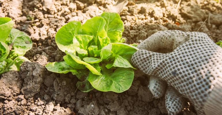 Coronavirus, Gruppo PD: autorizzare spostamenti per attività agricole e allevamenti amatoriali